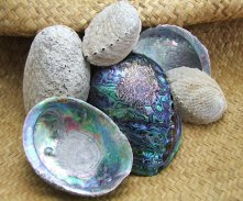 New_Zealand_paua_shells_2.jpg